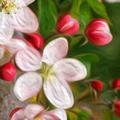 Baralho Florais de Bach